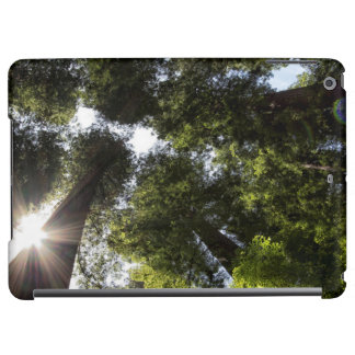 Redwoods, Humboldt Redwoods State Park Cover For iPad Air