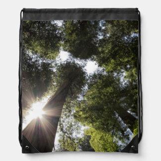 Redwoods, Humboldt Redwoods State Park Drawstring Bag