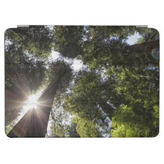 Redwoods, Humboldt Redwoods State Park iPad Air Cover