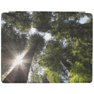 Redwoods, Humboldt Redwoods State Park iPad Cover
