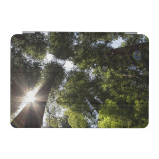 Redwoods, Humboldt Redwoods State Park iPad Mini Cover