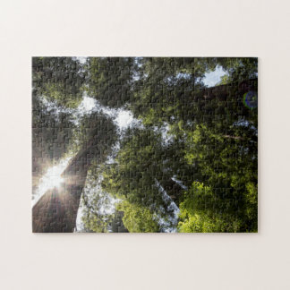 Redwoods, Humboldt Redwoods State Park Jigsaw Puzzle