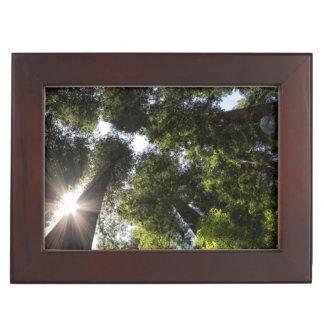 Redwoods, Humboldt Redwoods State Park Keepsake Box