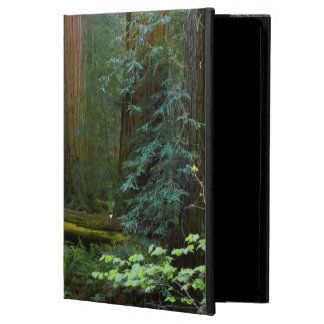 Redwoods In Muir Woods National Park iPad Air Cover
