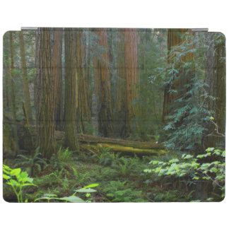 Redwoods In Muir Woods National Park iPad Cover