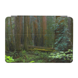 Redwoods In Muir Woods National Park iPad Mini Cover