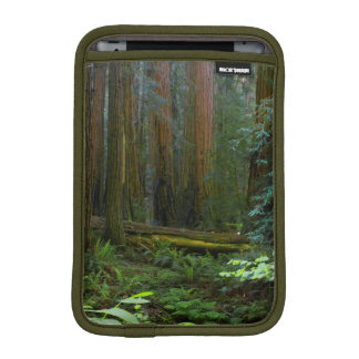 Redwoods In Muir Woods National Park iPad Mini Sleeve