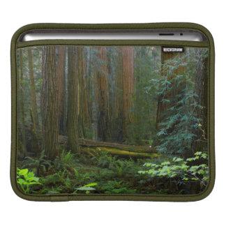 Redwoods In Muir Woods National Park iPad Sleeve
