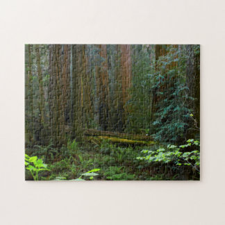 Redwoods In Muir Woods National Park Jigsaw Puzzle