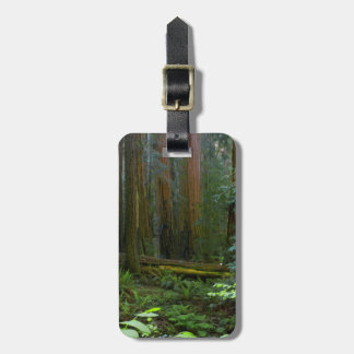 Redwoods In Muir Woods National Park Luggage Tag