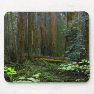Redwoods In Muir Woods National Park Mouse Mat