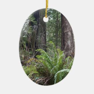 Redwoods National Forest Sword Ferns Ornament