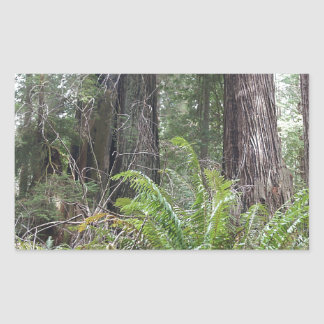 Redwoods National Forest Sword Ferns Sticker