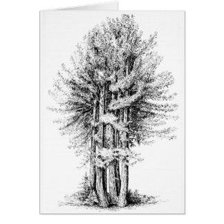 Redwoods Notecard