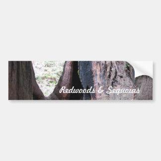 Redwoods Sequoias Bumper Sticker