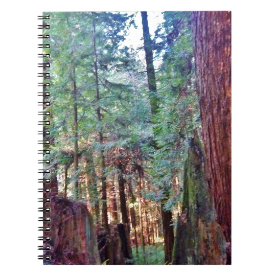 Redwoods Series #2: Through the Trees Notebooks
