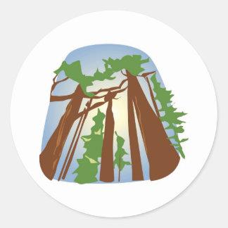 Redwoods with Sunshine Classic Round Sticker