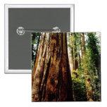 Redwoods- Yosemite Button