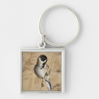 Reed Bunting (Emberiza schoeniclus) perched in Silver-Colored Square Key Ring