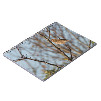 Reed Bunting Notebook