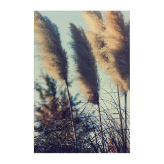 Reeds in the wind acrylic print
