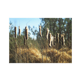 Reeds in the Wind Canvas Print