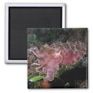 Reef_cuttlefish Square Magnet