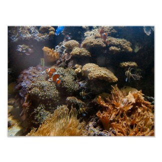 Reef Fish - Clownfish Poster