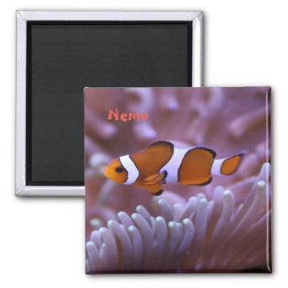 Reef magnet #2