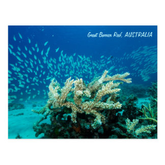 Reef Postcard