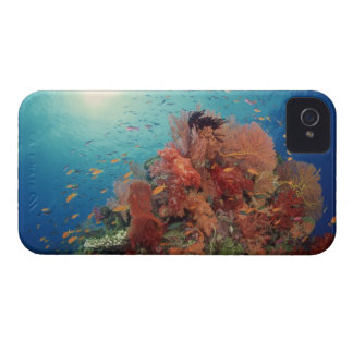 Reef scenic of hard corals , soft corals 2 Case-Mate iPhone 4 cases