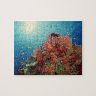 Reef scenic of hard corals , soft corals 2 puzzle