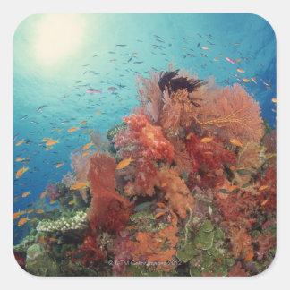 Reef scenic of hard corals , soft corals 2 square sticker