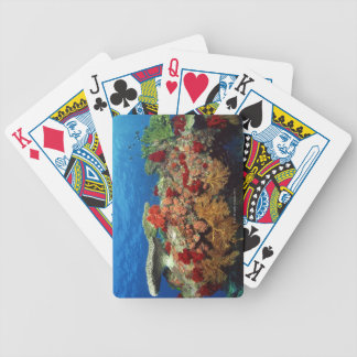 Reef scenic of hard corals , soft corals bicycle playing cards