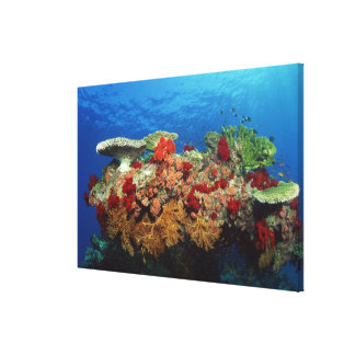 Reef scenic of hard corals , soft corals canvas print