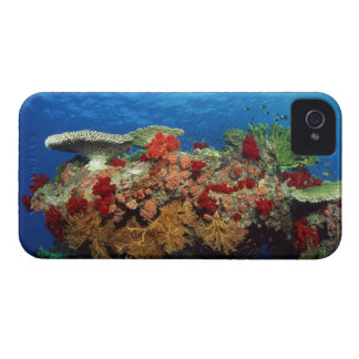 Reef scenic of hard corals , soft corals Case-Mate iPhone 4 cases