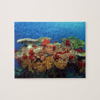 Reef scenic of hard corals , soft corals jigsaw puzzle