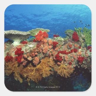 Reef scenic of hard corals , soft corals square sticker