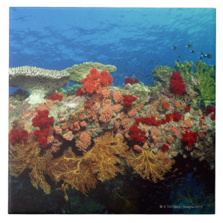 Reef scenic of hard corals , soft corals tile