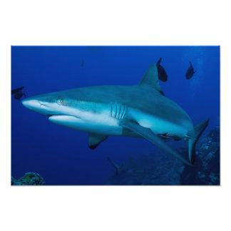 Reef Shark Photo Print