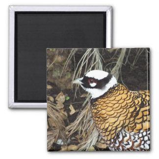 Reeve's Pheasant Square Magnet