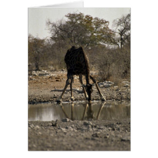 Reflected image of a drinking giraffe greeting cards