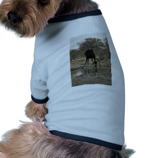 Reflected image of a drinking giraffe dog clothes