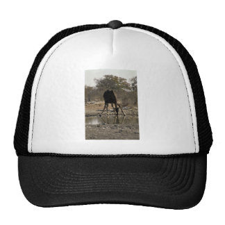 Reflected image of a drinking giraffe trucker hats