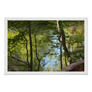 Reflections and Trees Photo Poster