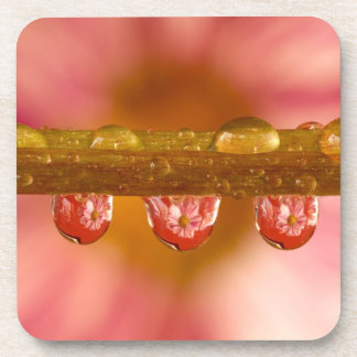 Reflections in the Raindrops Set of 6 Coasters