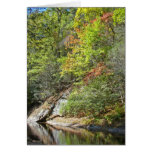 Reflections in the Swimming Hole Greeting Cards