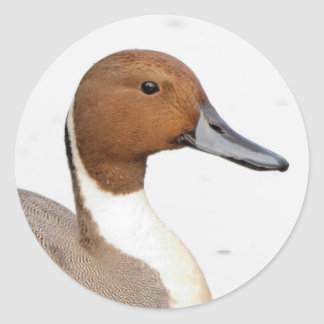 Reflections of a Northern Pintail Round Sticker