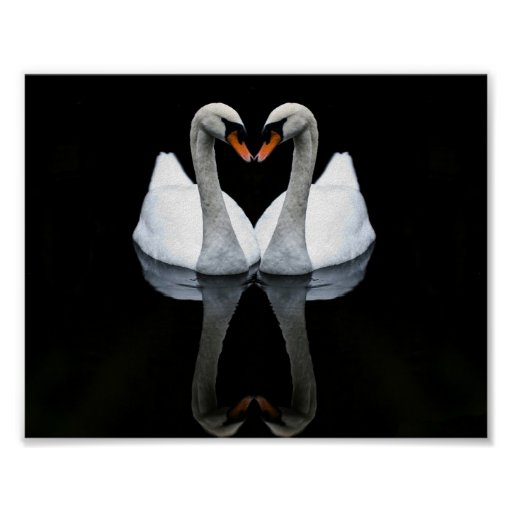 Reflections of Love, Heart Shape, White Swans Print
