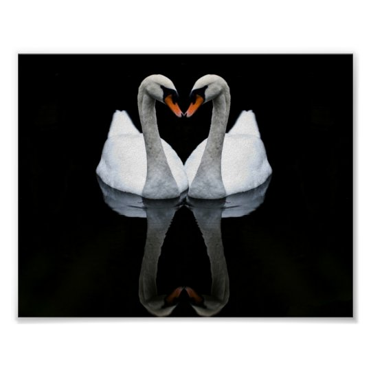 Reflections of Love, Heart Shape, White Swans Poster
